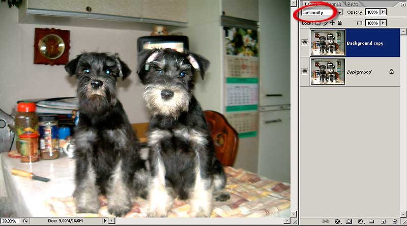 http://www.compartstudio.com/school/book/3-14/dogs_1.jpg